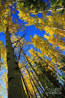 Yellow Trees Photograph - Colorado Sun by Dana Kern