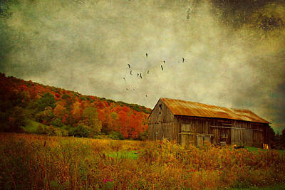 Photograph - Colored Flight by Emily Stauring