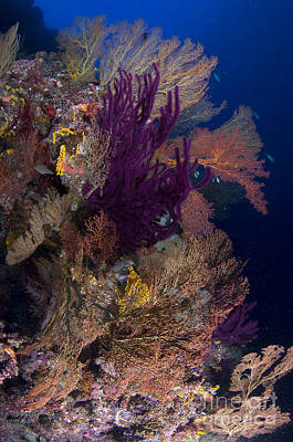 Photograph - Colorful Assorted Sea Fans And Soft by Steve Jones