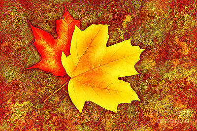 Photograph - Colorful Autumn Leaves by Cheryl Davis