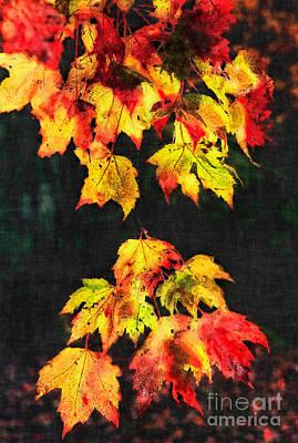 Colorful Autumn Leaves IIi Art Print by Dan Carmichael