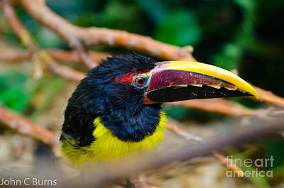 Photograph - Colorful Beak by John Burns