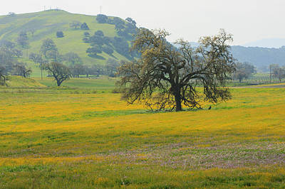 Photograph - Colorful Blooming Meadow by Dina Calvarese