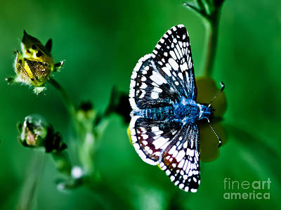 Colorful Butterfly Art Print by Mitch Shindelbower