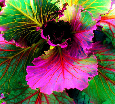 Photograph - Colorful Cabbage by Laura  Grisham