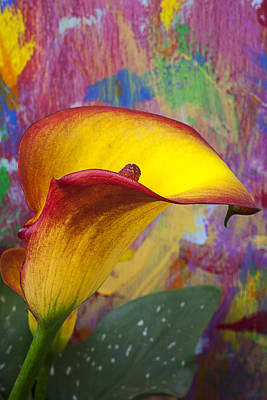 Colorful Calla Lily Art Print by Garry Gay