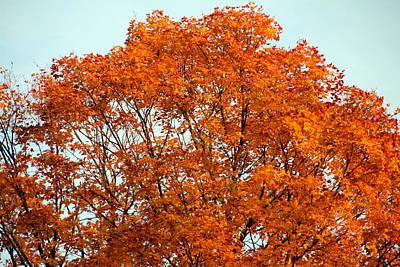Photograph - Colorful Canopy 007 by Mark J Seefeldt