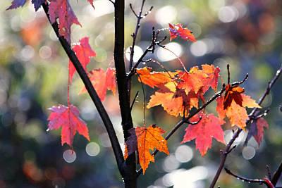 Photograph - Colorful Canopy 067 by Mark J Seefeldt