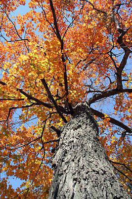 Photograph - Colorful Canopy 273 by Mark J Seefeldt