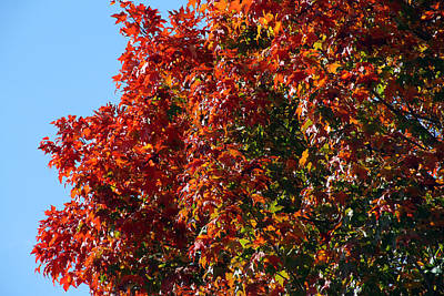 Photograph - Colorful Canopy 329 by Mark J Seefeldt