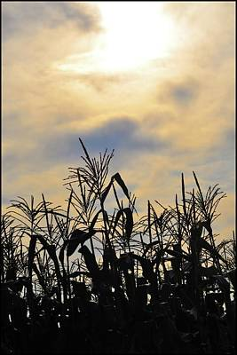 Colorful Clouds Over A Cornfield Print by Bill Cannon