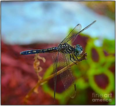 Photograph - Colorful Dragon Fly by Peggy Franz