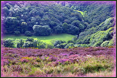 Photograph - Colorful Exmoor Heather by Carla Parris