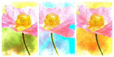 Photograph - Colorful Flowers Triptych by Carol Leigh