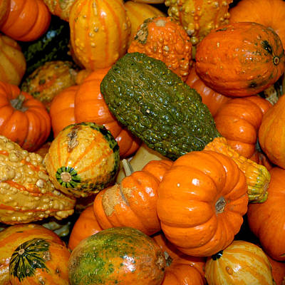 Photograph - Colorful Gourds by LeeAnn McLaneGoetz McLaneGoetzStudioLLCcom