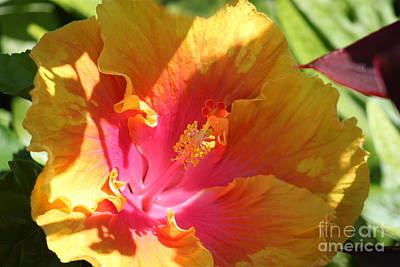 Photograph - Colorful Hibiscus 1 by Terri Thompson