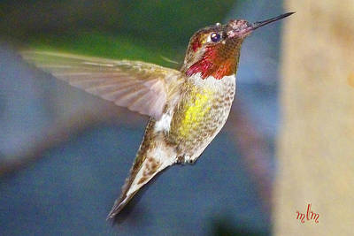 Photograph - Colorful Hummer by Marie Morrisroe