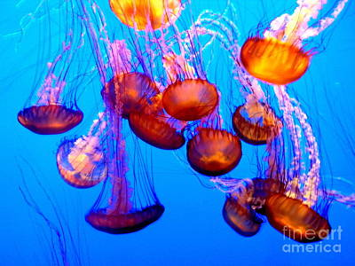Photograph - Colorful Jellies by Ellen Heaverlo