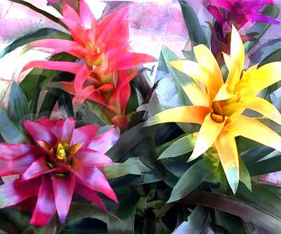 Bromeliad Painting - Colorful Mixed Bromeliads by Elaine Plesser