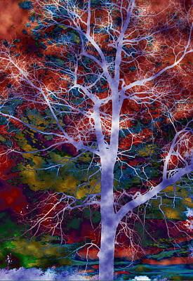 Photograph - Colorful Mystic Trees 2 Of 3 by Sheila Kay McIntyre
