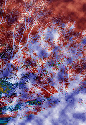 Photograph - Colorful Mystic Trees 3 Of 3 by Sheila Kay McIntyre