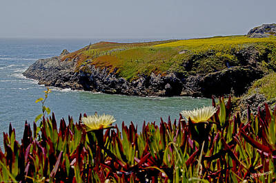 Photograph - Colorful Point by Mick Anderson