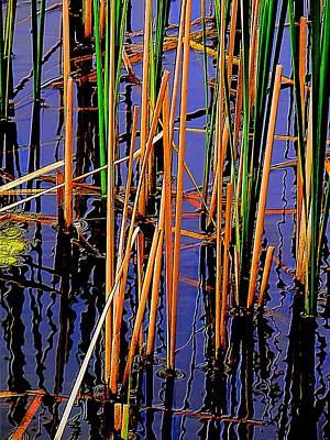 Colorful Reeds Art Print by Beth Akerman