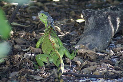 Art Print featuring the photograph Colorful Reptile by Jerry Cahill