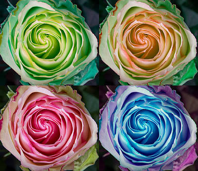 Photograph - Colorful Rose Spirals by James BO Insogna