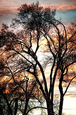 Anchor Down - Colorful Silhouetted Trees 11 by James BO Insogna