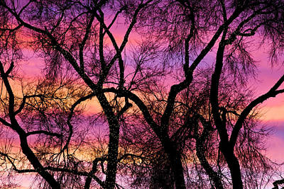 Colorful Silhouetted Trees 21 Art Print by James BO  Insogna