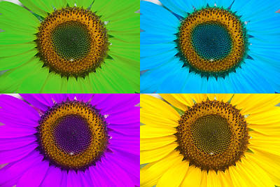 Photograph - Colorful Sunflowers by James BO Insogna