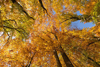 Herbstlaub Photograph - Colorful Trees In Fall by Matthias Hauser