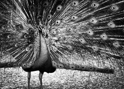 Wildlife Photograph - Colorless Beauty Queen by Jim Perpetos
