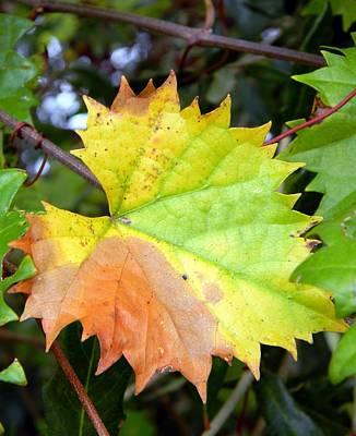 Colors Of The Wild Grape Original