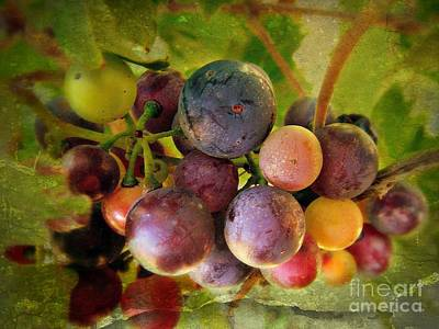 Colors Of Wine Art Print by Kevin Moore
