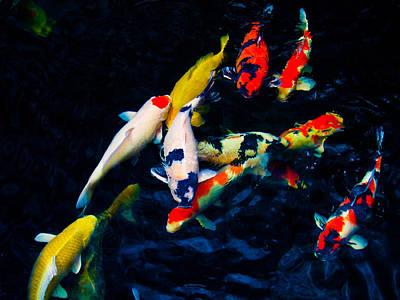 Photograph - Colourful Koi by Chua  ChinLeng