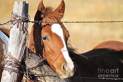 Photograph - Colt In Color by Pamela Walrath