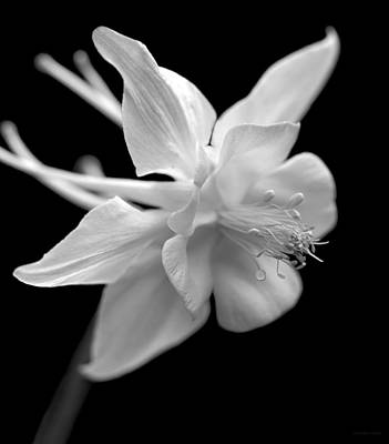 Photograph - Columbine Flower Macro Black And White by Jennie Marie Schell