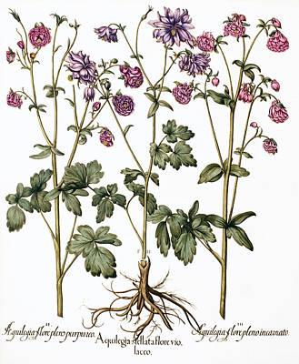 Columbine Flowers Art Print by Georgette Douwma