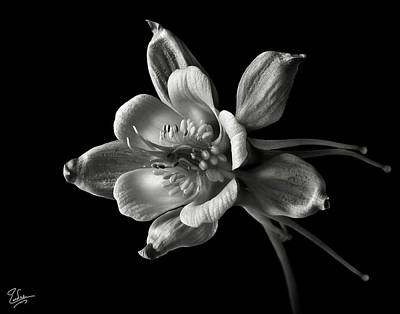 Print featuring the photograph Columbine In Black And White by Endre Balogh