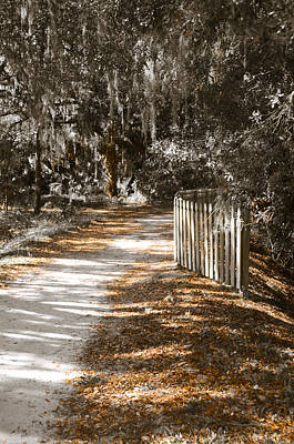 Path In Life Photograph - Come Follow Me by Carolyn Marshall