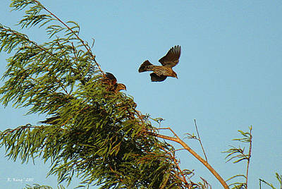 Photograph - Coming In For The Landing by Roena King