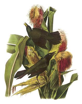 Corn Painting - Common Grackle by John James Audubon