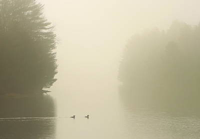 Quabbin Reservoir Photograph - Common Mergansers In Morning Fog by John Burk