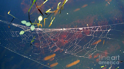 Art Print featuring the photograph Complexity Of The Web by Nina Prommer