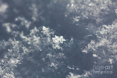 Photograph - Complicated Snowflake by Donna Munro