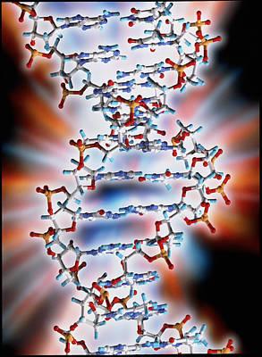 Molecular Graphic Photograph - Computer Graphic Of A Segment Of Beta Dna by Pasieka