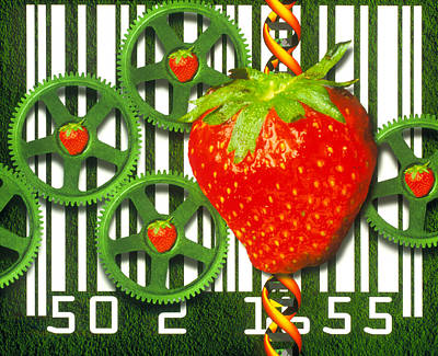Conceptual Image Of Genetically-engineered Fruit Art Print by Victor Habbick Visions
