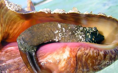 Conch Face- Who Knew Art Print by Li Newton